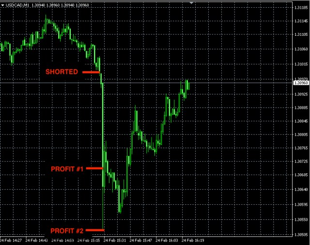 best forex signals feb24