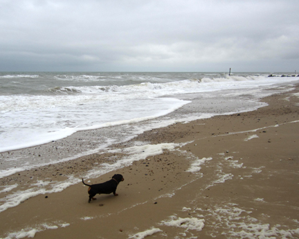 miniature dachshund on Norfolk Beach