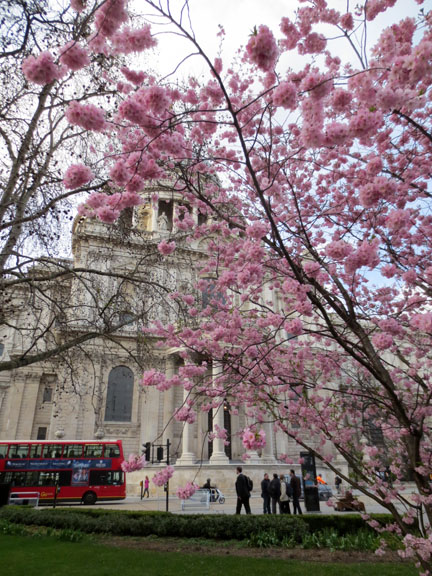 St Paul's Cathedral, blossom & sunshine