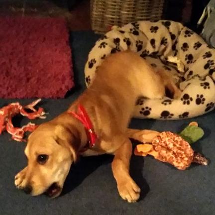 Alpha dog for Happy Friday