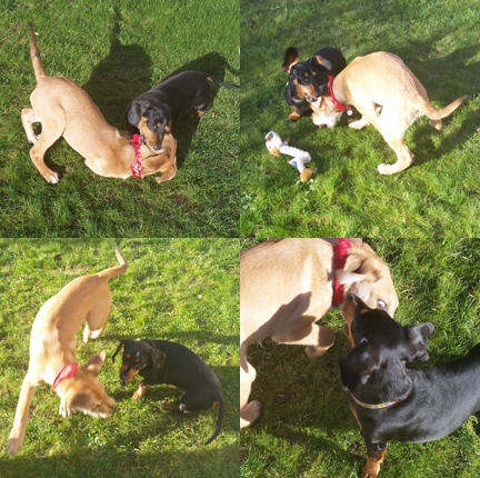 Dog montage for Happy Friday