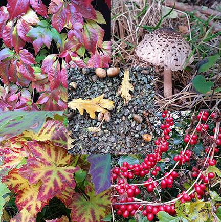 Autumn Colours - autumn planning
