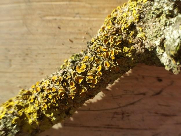 December lichen