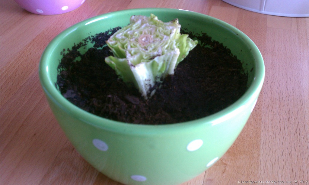 Reduce, Reuse, Recycle… And Regrow Veggies? | Planetpowers