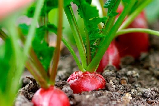 vegetalesinvierno-5