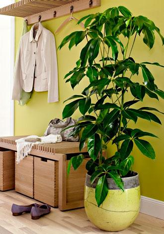 8 plantas de interior que no necesitan muchos cuidados - Cuidados planta aloe vera casa ...