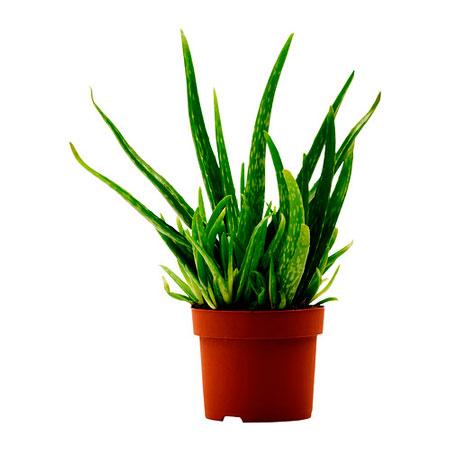 plantas-interior-menos-cuidados-5