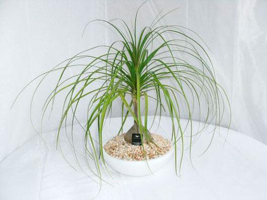 plantas-interior-menos-cuidados-6