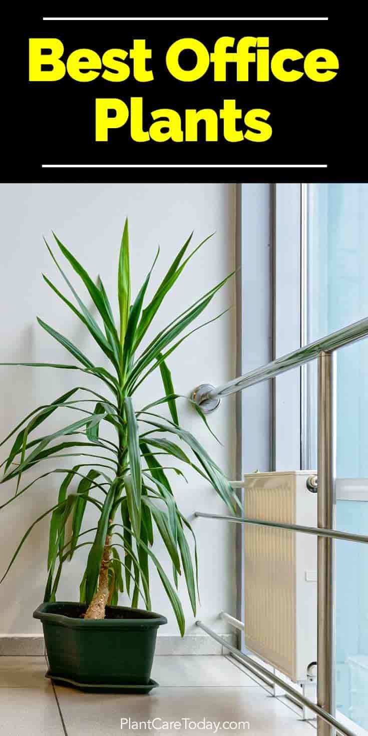 Indoor Plants For The Office Best Indoor Plants For The Office