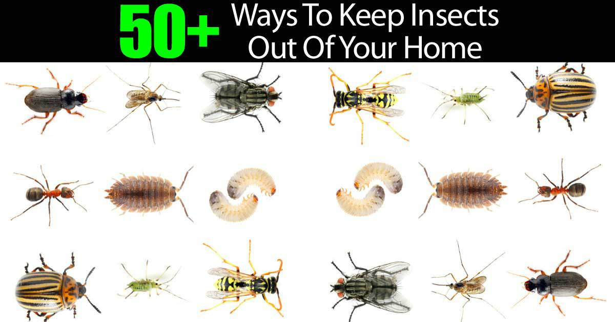 50 Ways To Keep Insects Out Of Your Home