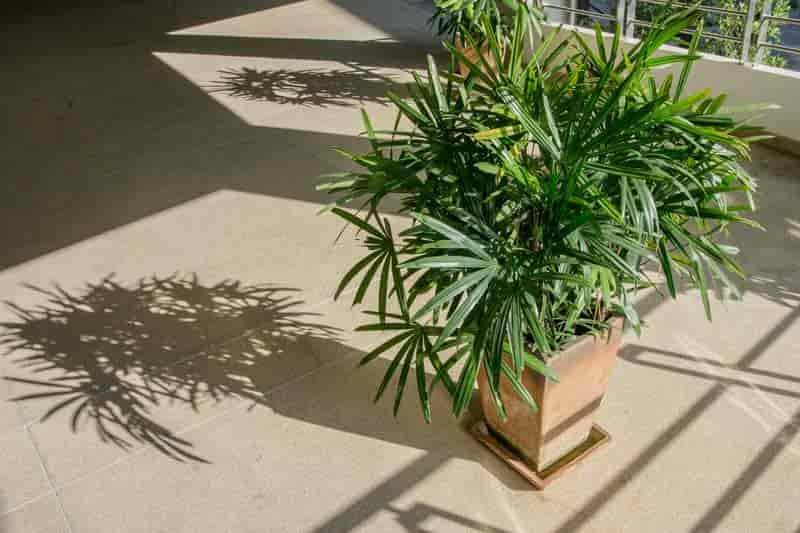 Palme Ableger 35 Of The Best Indoor Plants For Your Home!