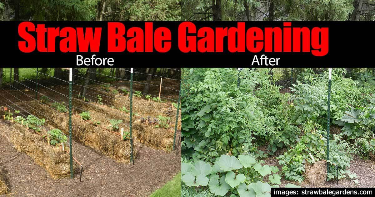 """Straw Bale Gardening: 10 """"Easy Growing"""" Reasons To Try It"""