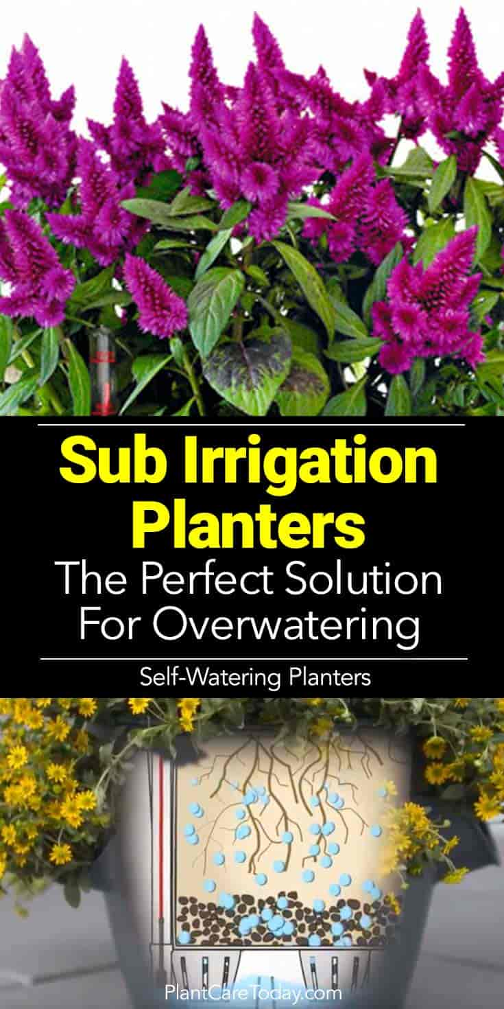 Make Self Watering Planters Sub Irrigation Planters Is A Sip Right For You And Your Plants