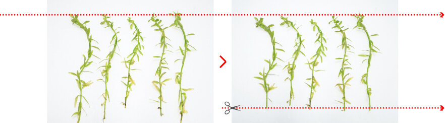 cuttingstemplants
