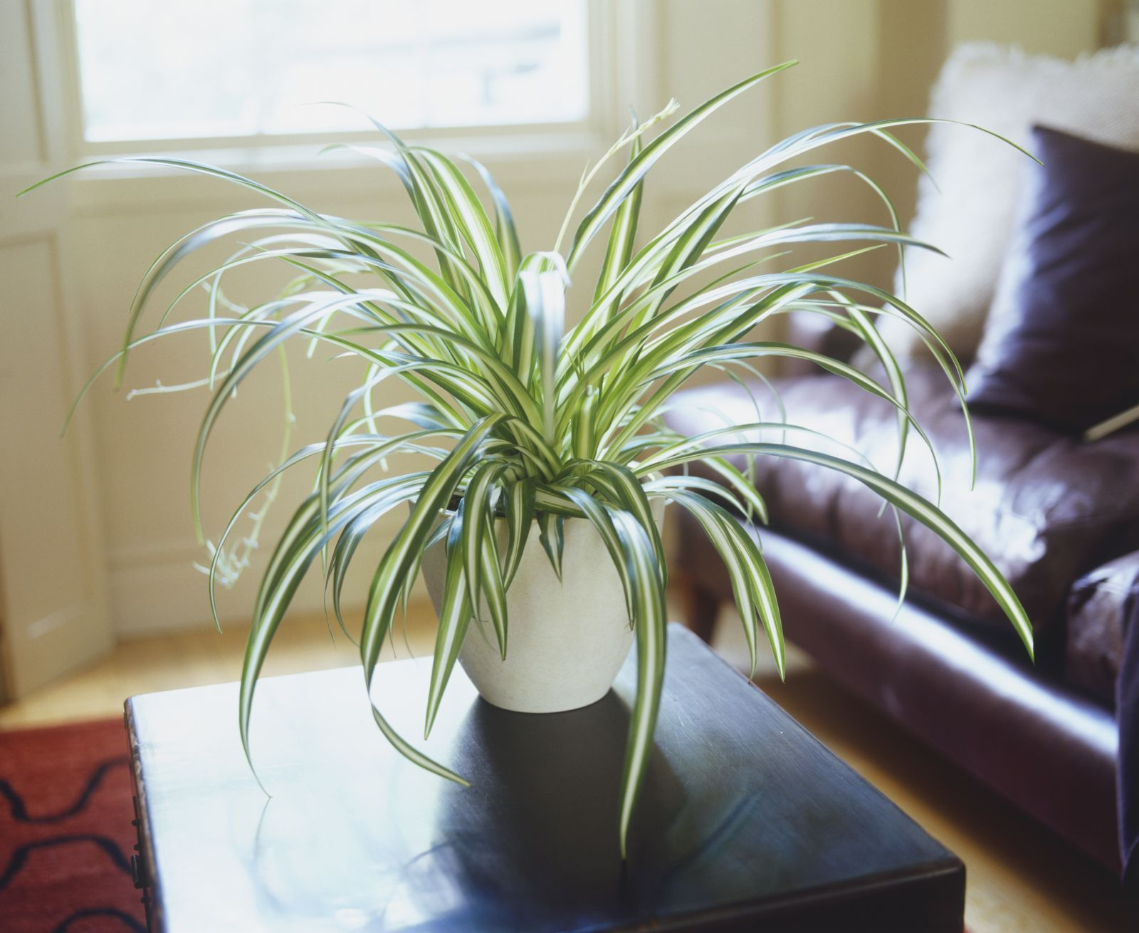 Indoor Plants For Low Light House Plants Which Of These 30 Best House Plants Should You Get
