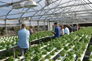 Hydroponic facilities at Archi's Acres, a diverse farming operation in San Diego County.