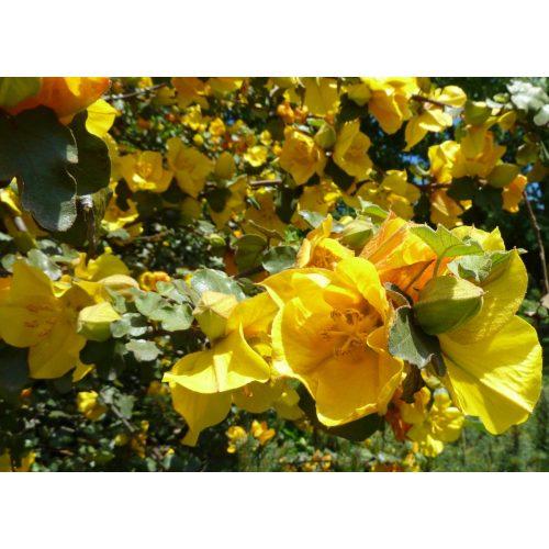 Medium Crop Of San Gabriel Nursery