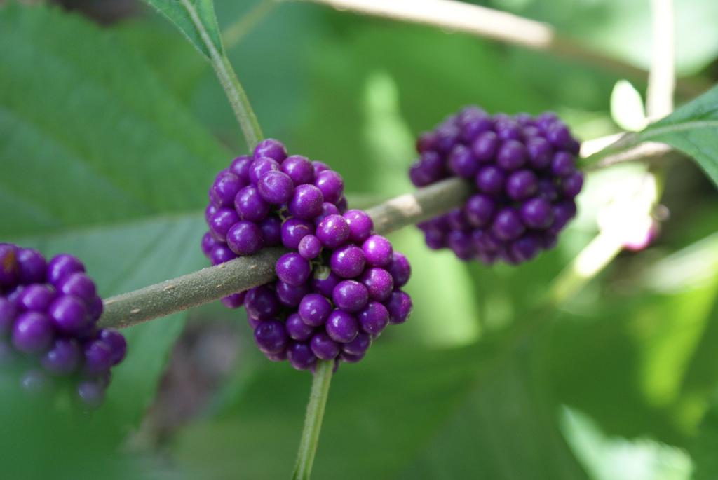 Five berry-bearing shrubs birds love in winter