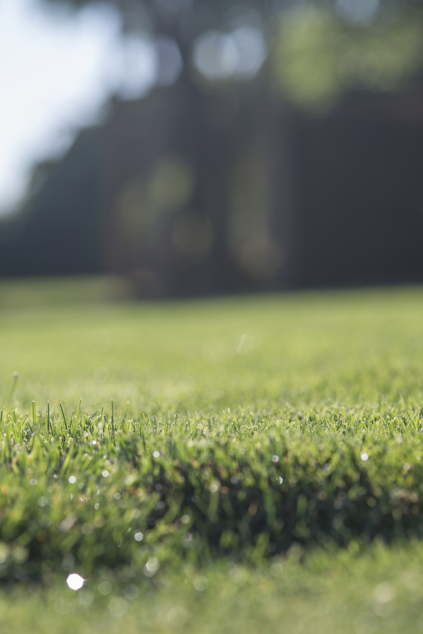 Establish a lush lawn by renovating or planting in early fall