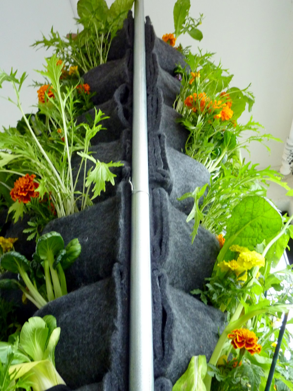 Vertikal Gardinen Aquaponic Vertical Vegetable Garden Florafelt Vertical