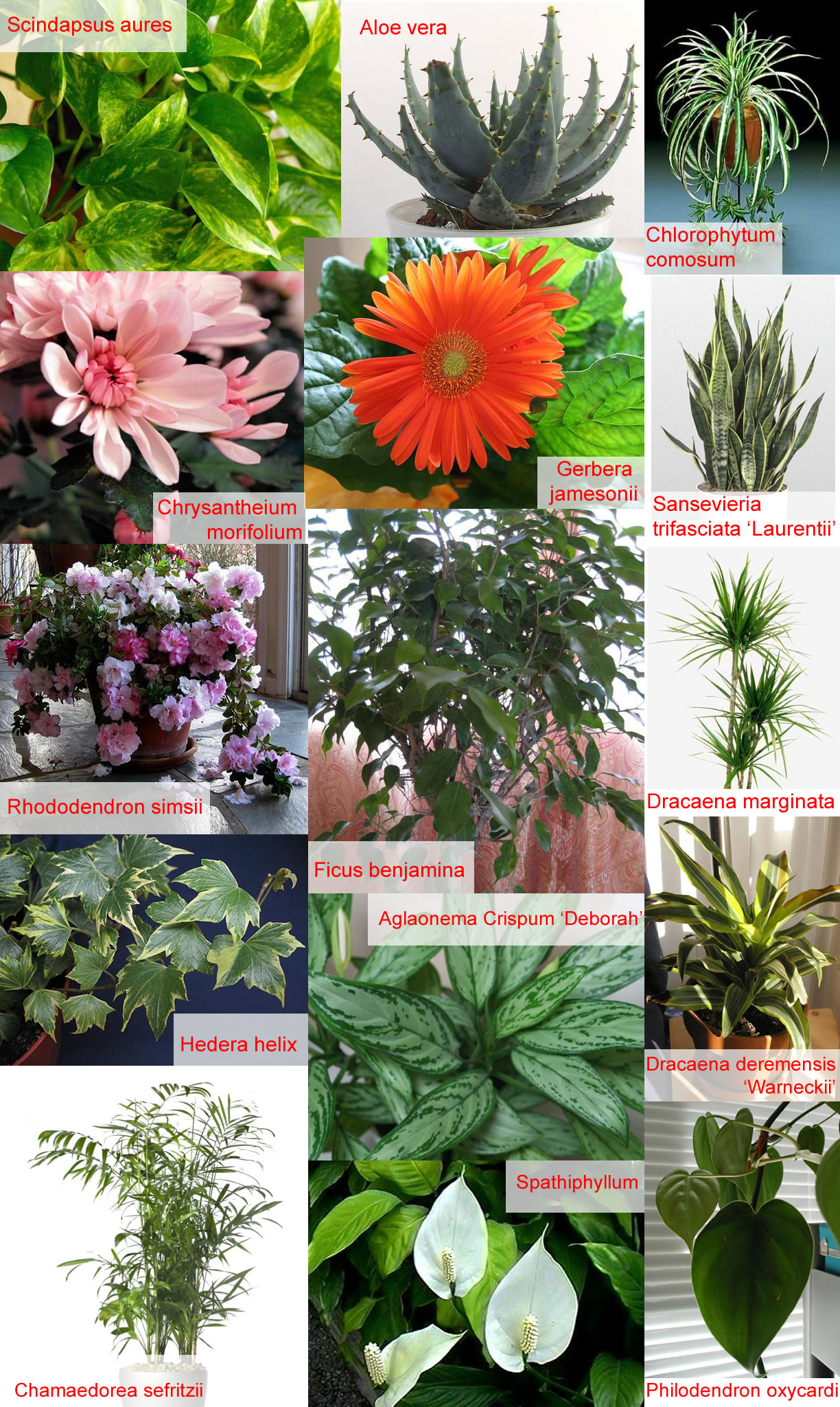 Indoor Plants And Flowers Plants And Flowers Indoor Plants