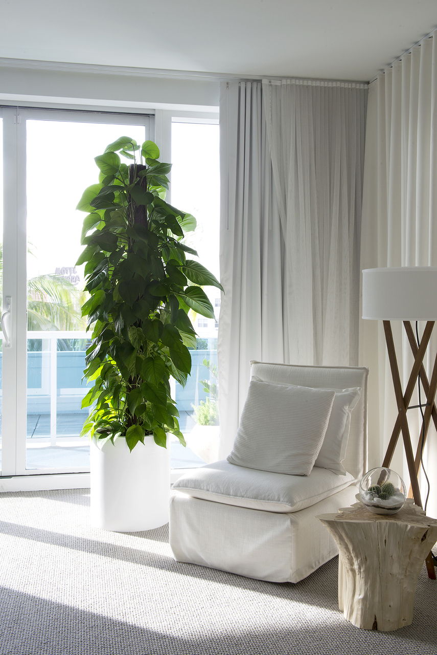 Jungle By Night Indoor Plants For Luxury Apartments - Plant The Future