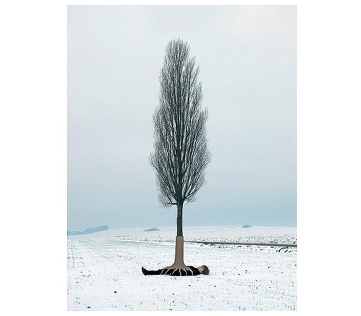 Marc Sommer, L'arbre à souhaits 2013