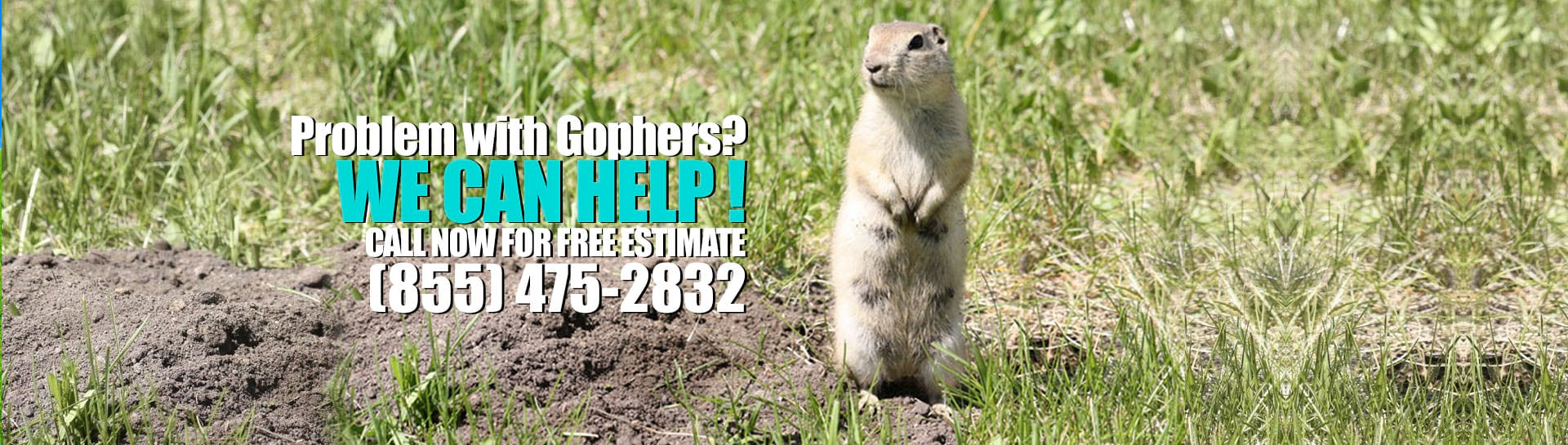 Problem with Gophers