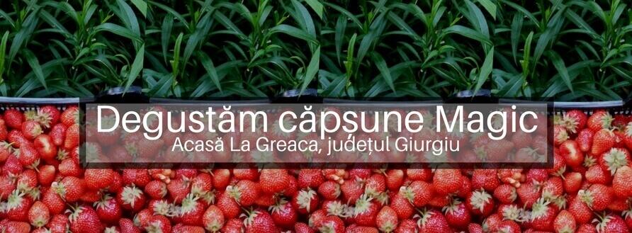 Degustăm căpșune românești de la Acasă la Greaca