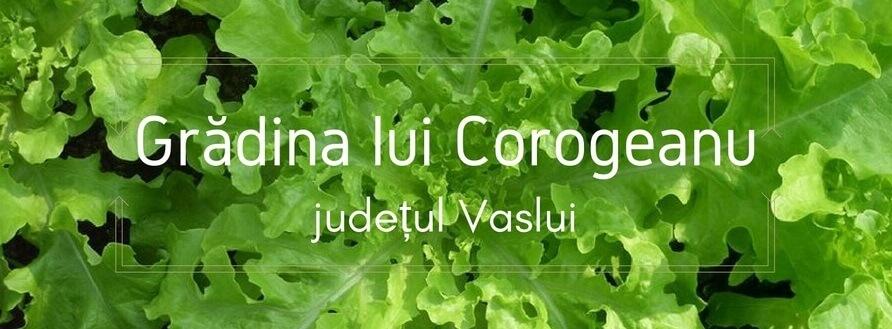 Grădina lui Corogeanu, judeţul Vaslui