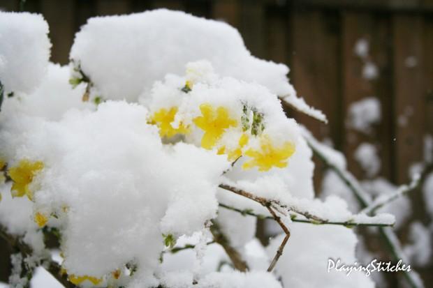 [:en]Blooming Jasmin under snow[:ru]Цветущий под снегом жасмин