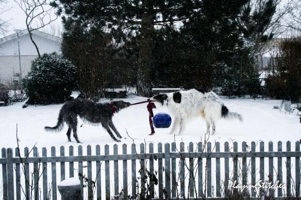 [:ru] гончие борзая снег в конце марта в моем саду