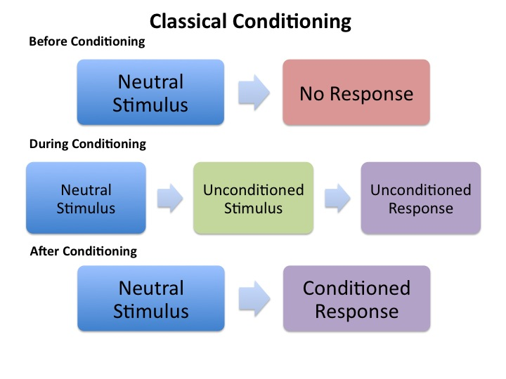 Learning Classical Conditioning PlayLearnParent - examples of classical conditioning