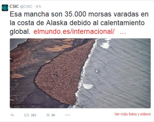 el-csic-y-las-35000-morsas-de-alaska-el-mundo