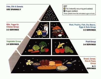 food pyramid 1992