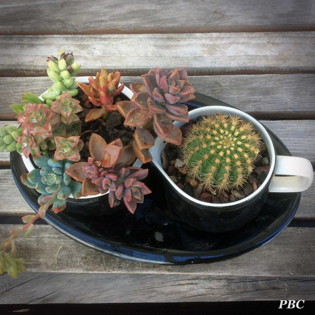 Cactus Planters Pottery A Succulent About To Flower Plum Bird Cornerplum Bird Corner