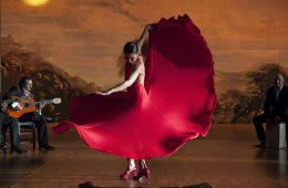 flamenco-2-cusica-plus