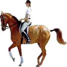 No Girl No Tension Hd Wallpaper Download Png Horse Riding Transparent Horse Riding Png Images