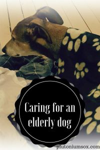 Caring for an elderly dog