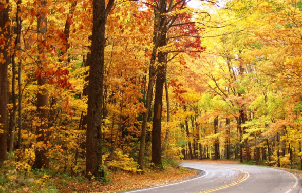 Pure Michigan Fall Wallpaper Now S The Time To Plan Your Fall Color Vacation Plymouth
