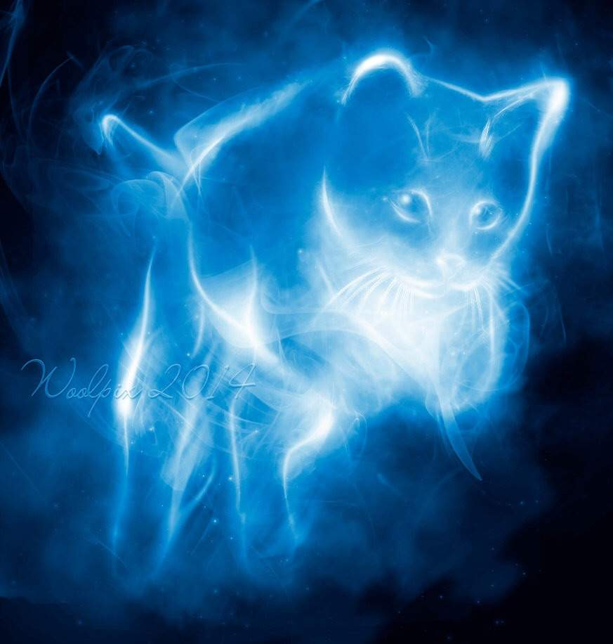 Animal Computer Wallpaper Nebelung Cat Patronus Harry Potter Amino