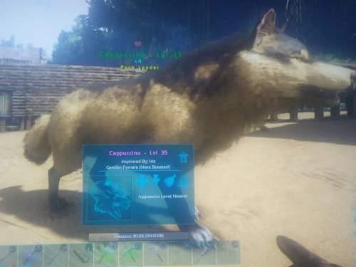 Medium Of Wolf Names Female