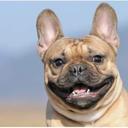 Small Crop Of Dogs With Braces