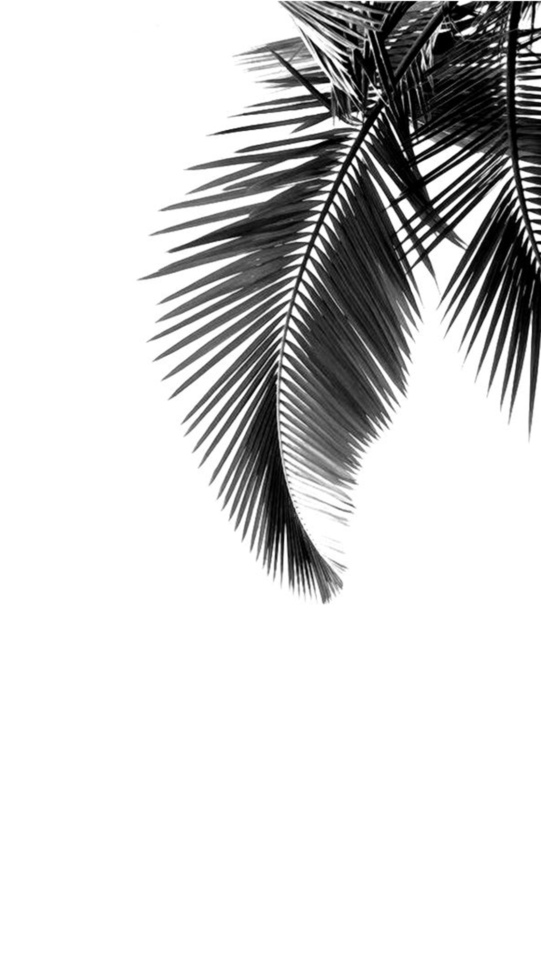 Fall Leaves Watercolor Wallpaper Banana Tree Leaves Simple Black And White Gray Background