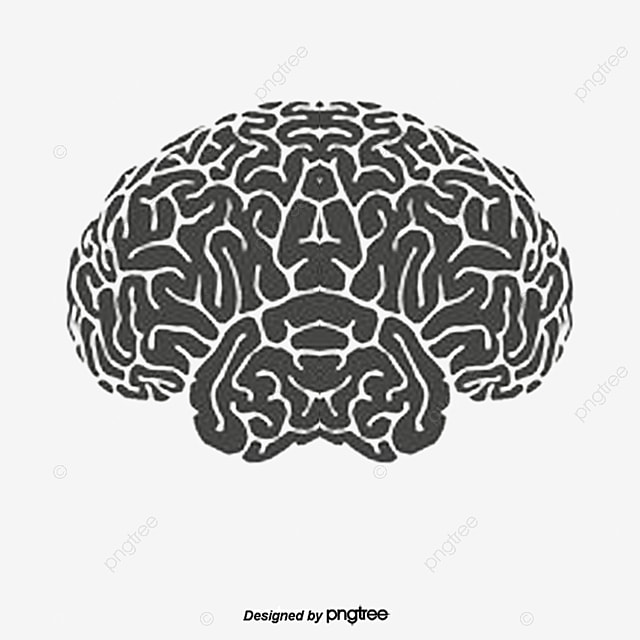 Human Brain Vector, Human Vector, Brain Vector, Hand PNG and Vector