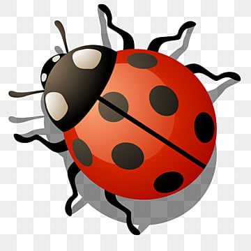 Ladybug PNG Images Vectors and PSD Files Free Download on Pngtree