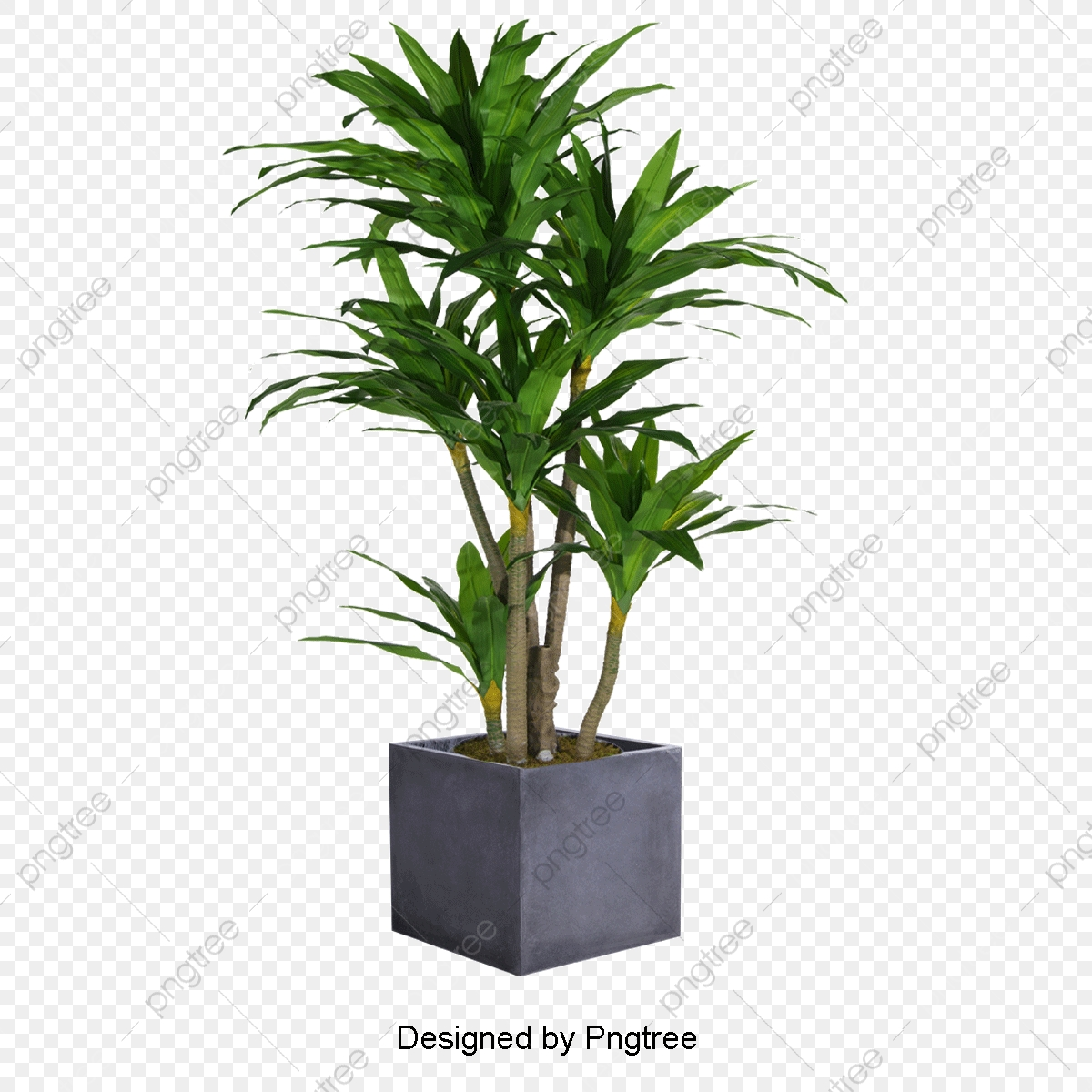 Plant Png Vector Psd And Clipart With Transparent Background For Free Download Pngtree