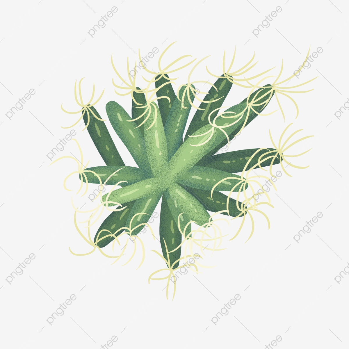 Plant Top View Png Vector Psd And Clipart With Transparent Background For Free Download Pngtree