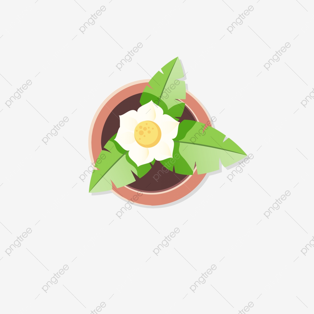 Cartoon Flowers Top View Download Cartoon Flowers Potted Flowers Indoor Green Plants Png Transparent Clipart Image And Psd File For Free Download