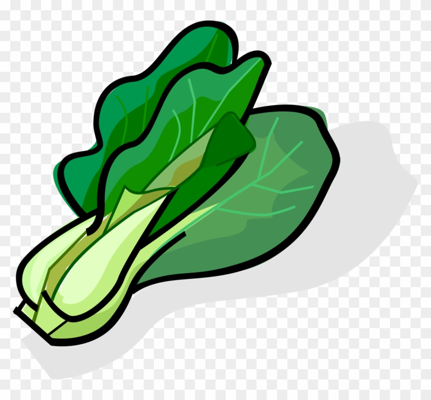 Vector Illustration Of Bok Choy Edible Chinese Cabbage